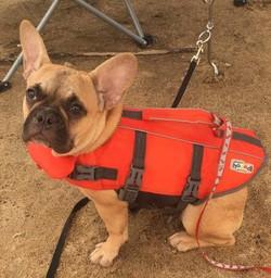 Stella taking her first swim!