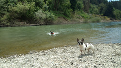 Going for a swim in the Russian River, CA.