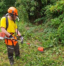 Bee Eco Gardens offer Professional Garde