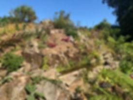 plating, alpines, flowers, rockery