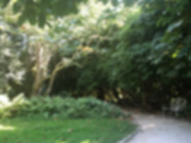 garden, lawn, trees, plants, leaf, gardening