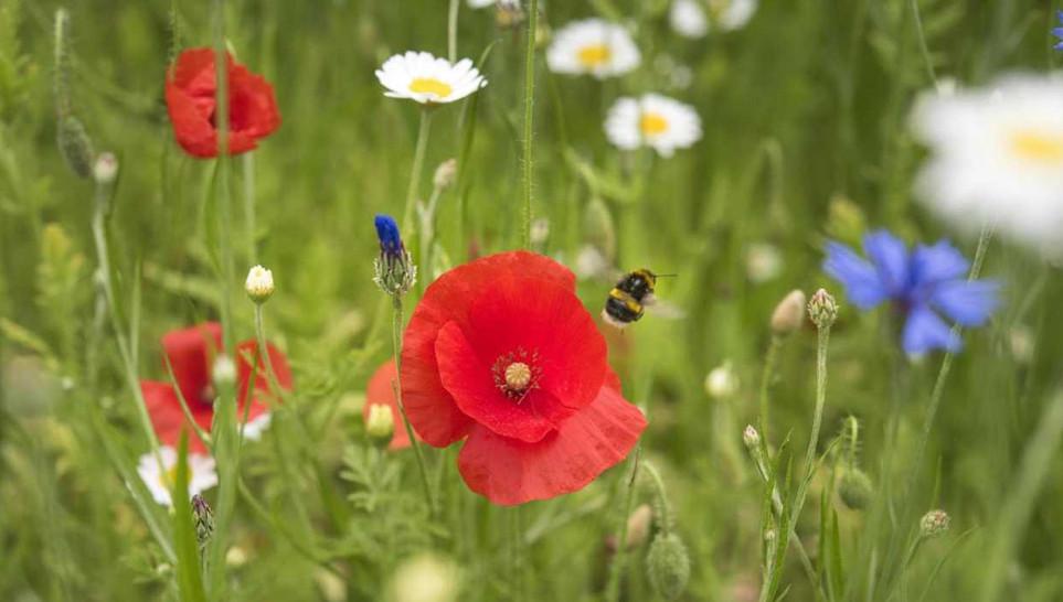 wildflowers-eden-project.jpg