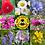 Thumbnail: Wildflower Beeballs