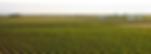 vinos organico, vino organico, organic, ecologico, bodegas ehd, hermanos delgado, la mancha, campo de criptana, viñedos espanoles, viñedo, vino