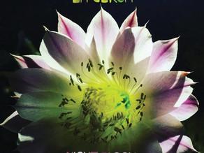 Night Bloom album cover
