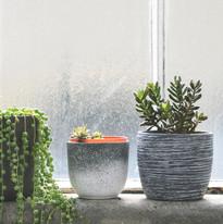 Plantes succulentes sur Windowsill