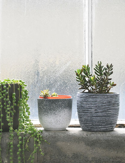 Succulents on Windowsill