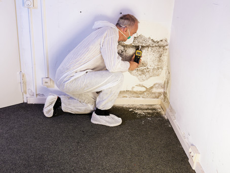 What To Expect During A Termite Inspection
