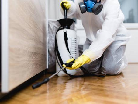 Professional Termite Control Versus Do-It-Yourself In Newcastle