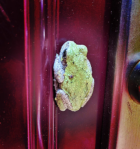 Frog by Asher print(s)