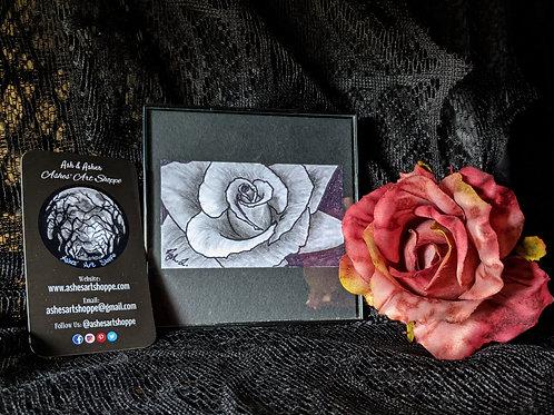 Ash's Rose Study #2