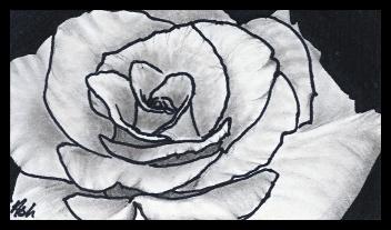 Rose Study - Ash. L.