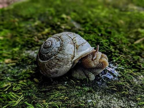 Lips the Snail by Asher