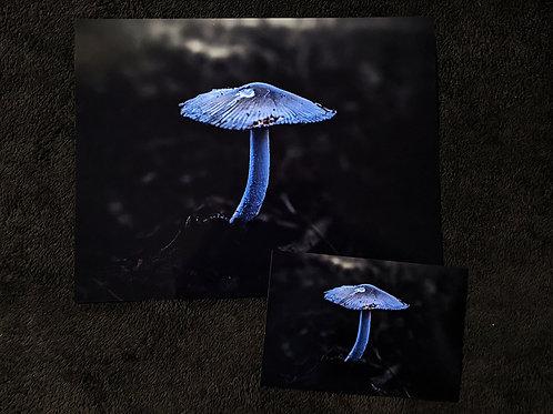 Asher Mushroom #2