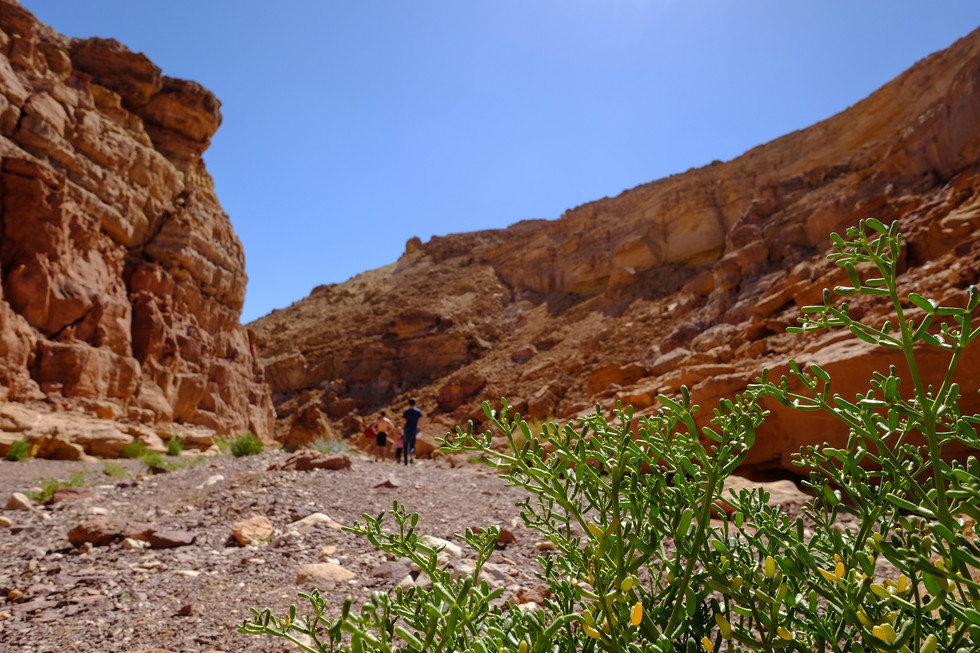 Red canyon, South of Israel