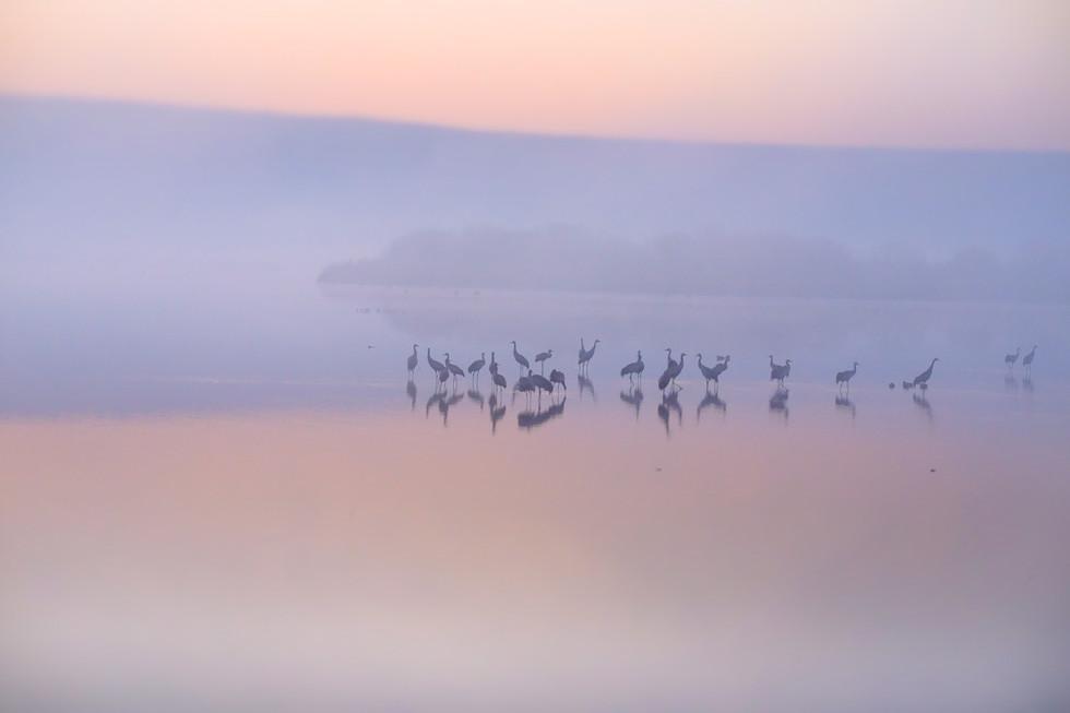 Birds reflections, sunrise, Hula lake
