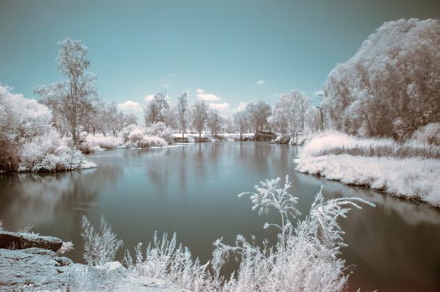 the frozen pond