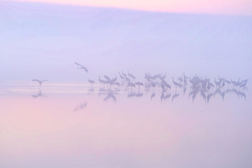 birds at sunrise hula lake