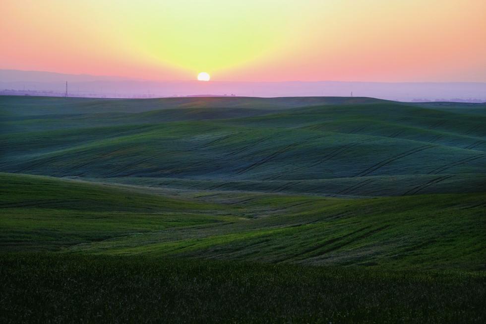 Green meadows at sunrise