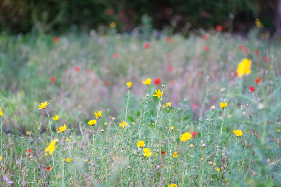 wild flowers, yellow and green
