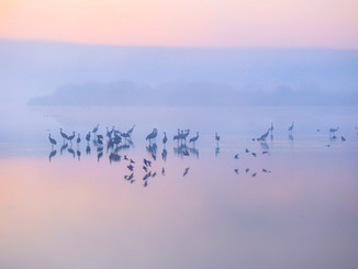 photo of birds reflection on the water a