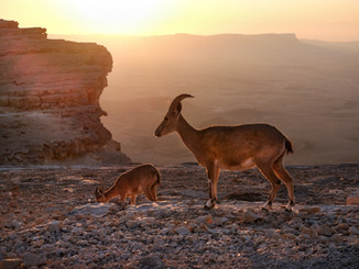 Ibex end child at sunrise.jpg