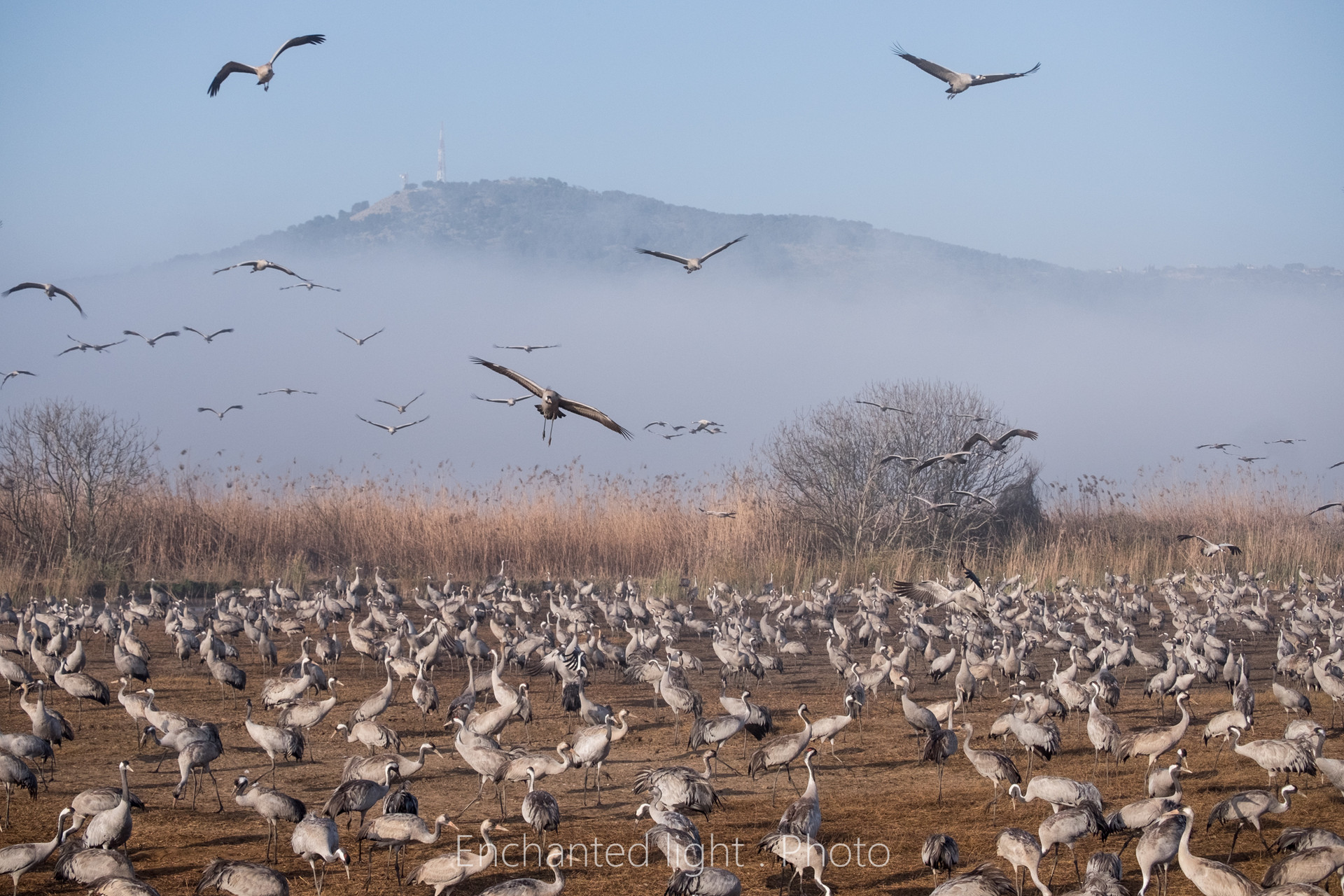 Cranes at hachula lake