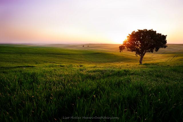 The lone tree, Sunrise