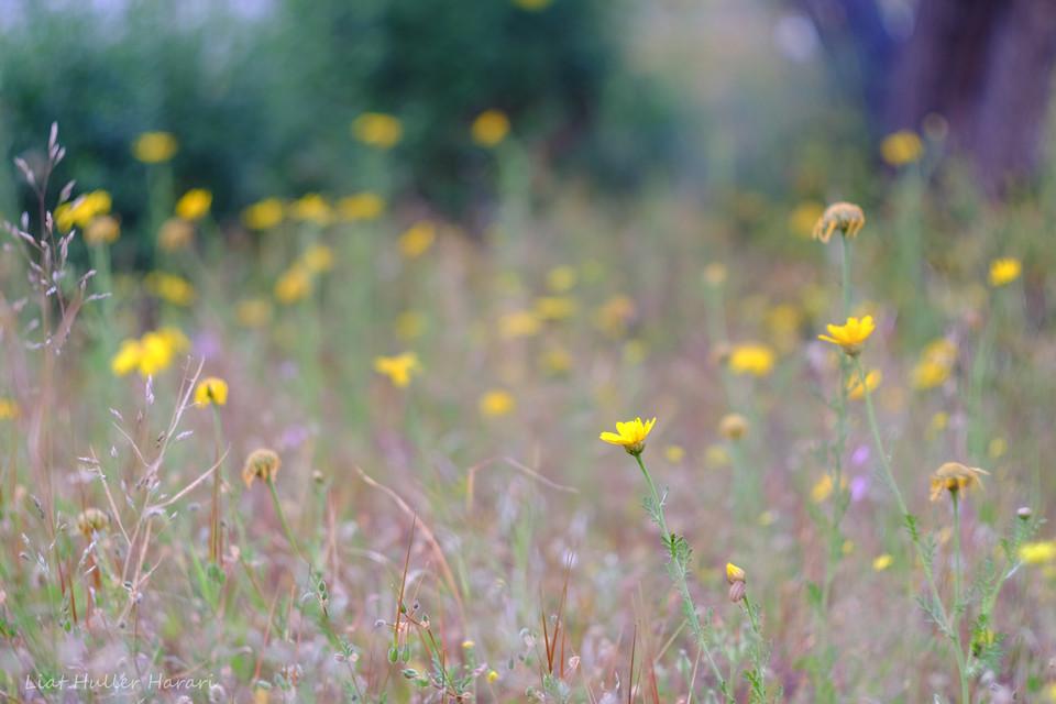flowers fading