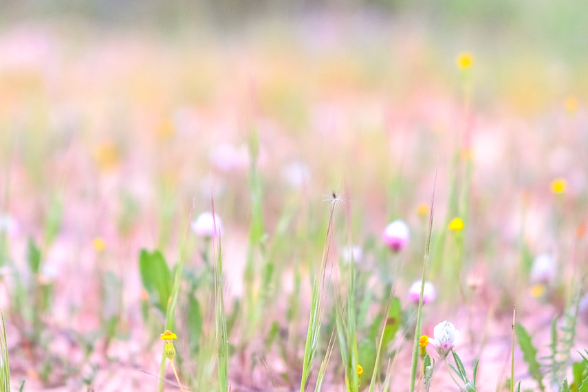 Flowers in pastels-the small things