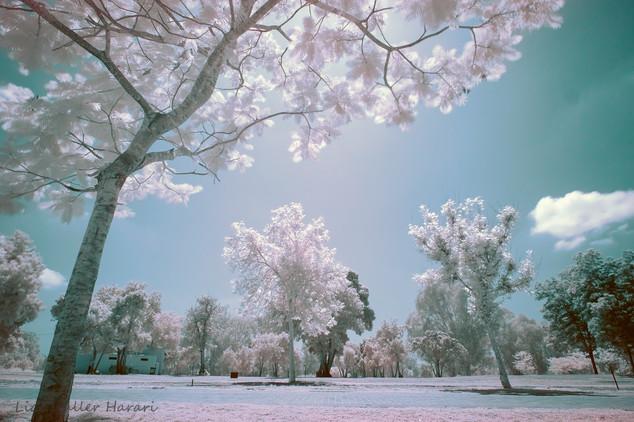 White sun, white trees