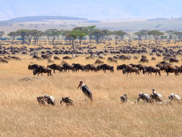 Tanzania, Africa, the great migration
