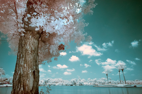 white clouds, water and trees