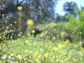 Flowers, yellow blossom