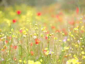 yellow red soft flowers blooming forest.