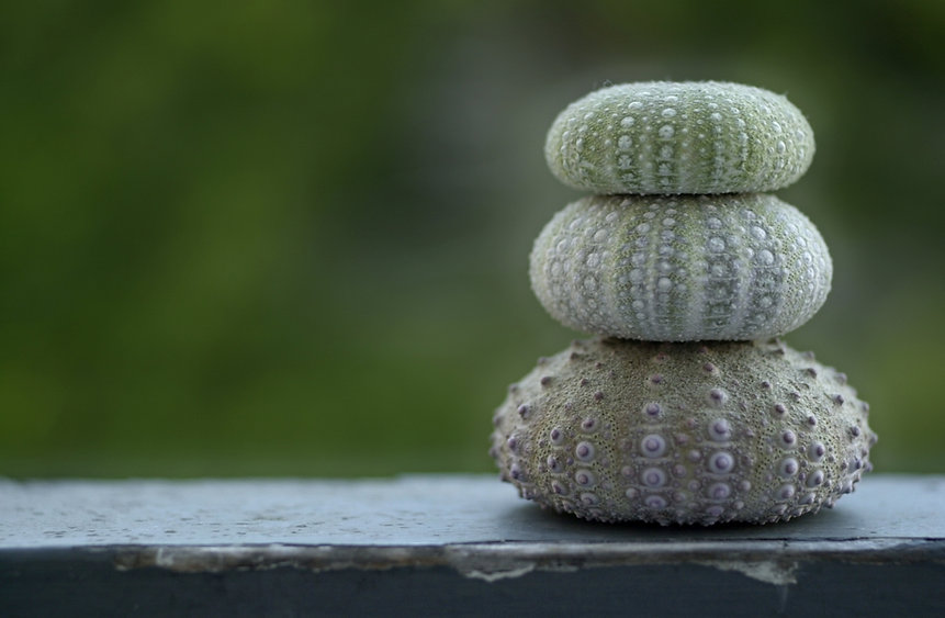 Three stacked purple and green sea urchin shells rest on a peeling shelf with a dark green blurred background.