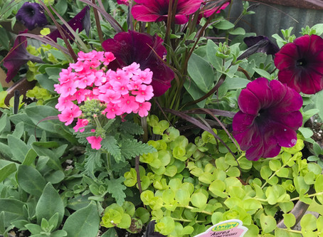 """The """"-illers"""" of Container Gardening"""