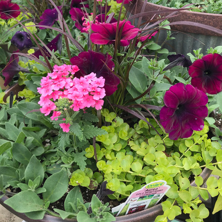"The ""-illers"" of Container Gardening"