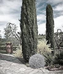 Progetto giardino - AplusP