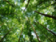 canva-forest,-trees,-nature-MAC5OB2Cr8k.