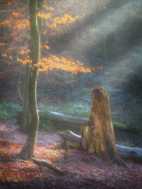 Sunrays on Golden Leaves_Al Haden