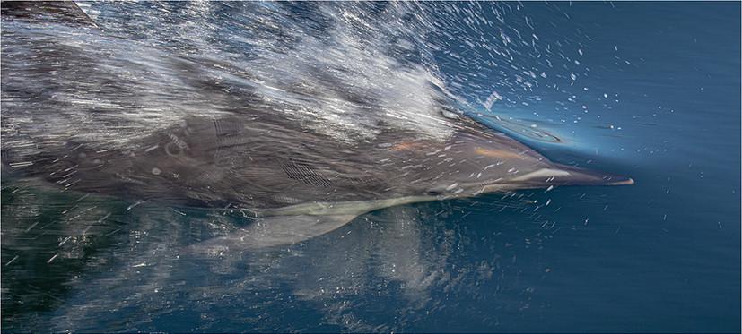 Cornish Dolphin breaking through