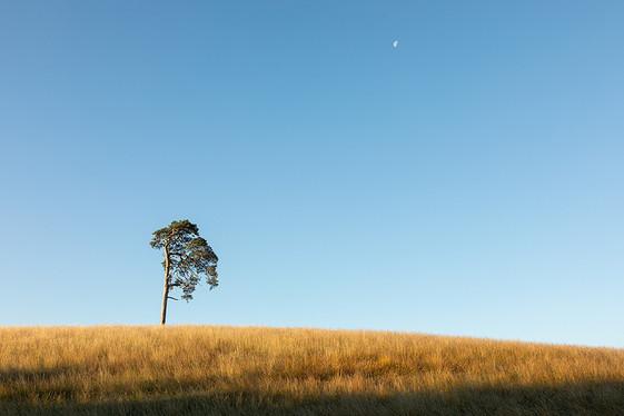 Lone Pine_Mark Wild