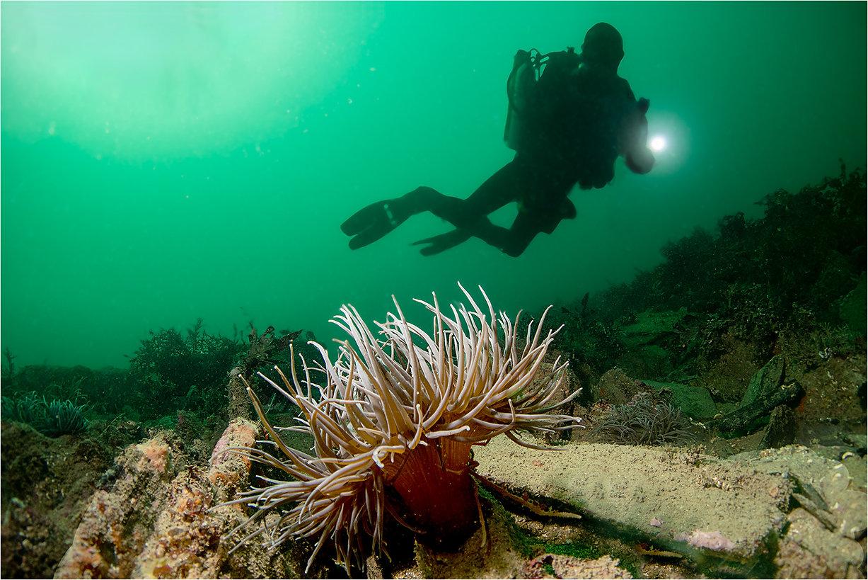 Snakeslock anemone