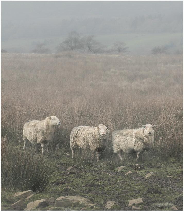 Trio In The Mist
