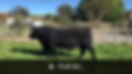 Bull Video.png