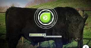 RuralTV Video.PNG