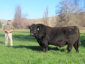Turiroa Complete 18P250, sold to Oregon Angus for $86,000