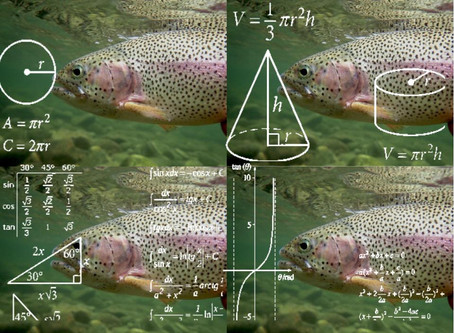 The Mind of a Picky Trout (Part 1): ⧫⧫ Crash Course