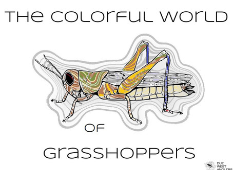 The Colorful World of Grasshoppers